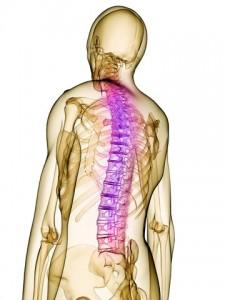 spine injury triggered autonomic hyperreflexia, Skeleton