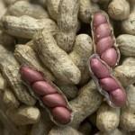advantages-of-peanuts